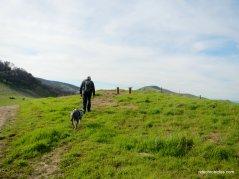 ridge trail to vista bench