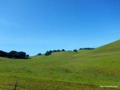 lone tree valley