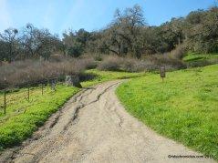 to oak tree trail