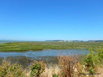 san pablo creek marsh