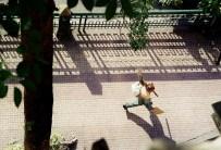 Yuri Martins Fontes / Egito-2007 / Cairo: Gari na Praça Tahir