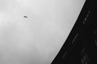 greyday-4