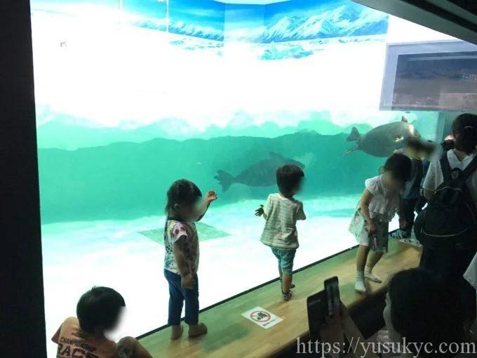 琵琶湖博物館水族展示室