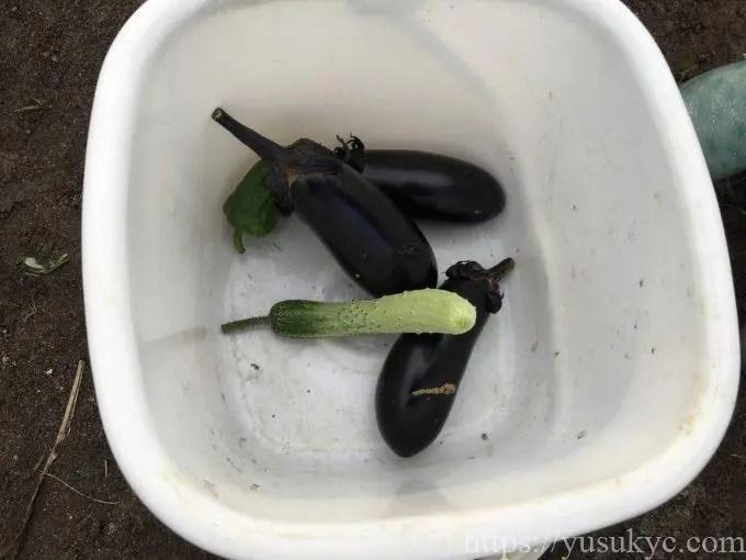 収穫野菜(ナス・キュウリ・ピーマン)