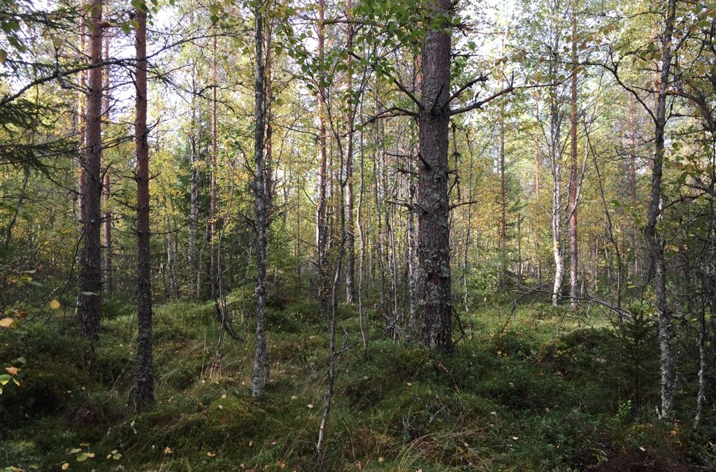 芬蘭健行獨自旅行者  SoloTraveler Hike In Finland