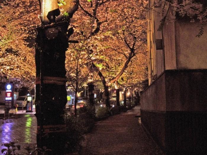スペイン坂の秋みたいな桜並木3