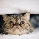 猫を飼う費用はどれくらい?結構高い?安い?