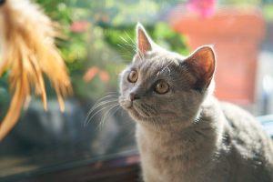 在宅ワークで猫や子供に邪魔される!効果的な3つの対処法を大公開