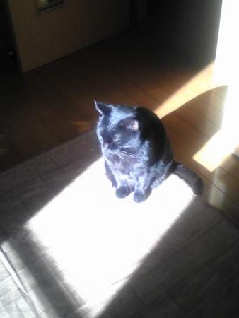 窓おじさんのコマーシャル日向を追いかけている猫のやつ