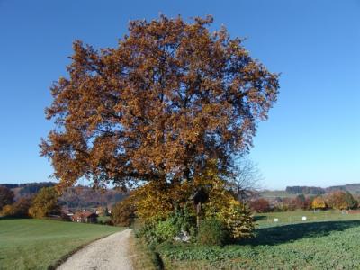 Die Bäume tragen ihr Herbstkleid