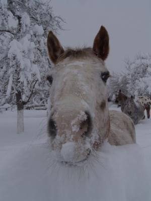Das Pferd kommt mich begrüssen