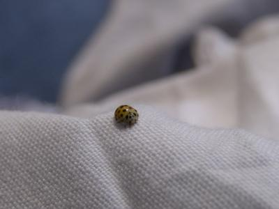 Ein süsses Käferchen