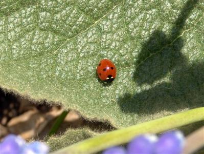 Ein Marienkäferchen in der Sonne
