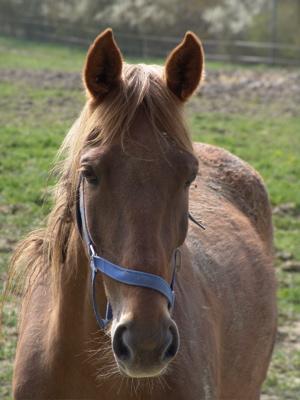 Ein Pferdchen