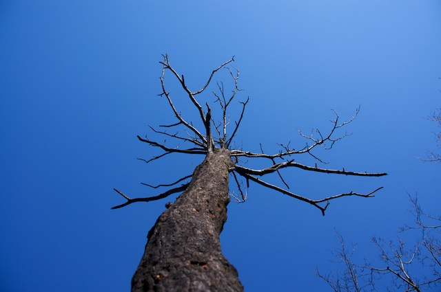 Questo albero non ha neanche più una singola foglia