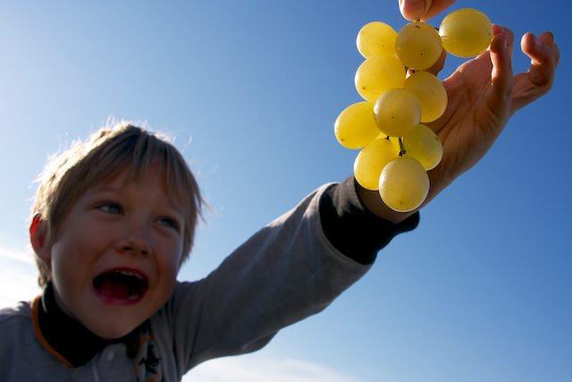 Fonzie piace l'uva