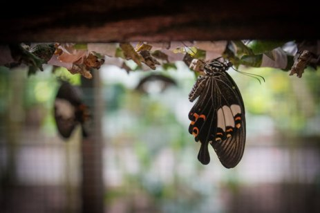 Here you can see the newborn butterflies