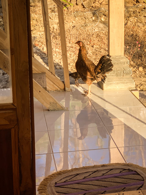 Look who's greeting us after breakfast!