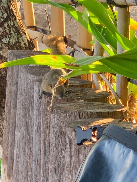 That squirrel is pretty curious!