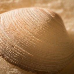 Alabaster Shell