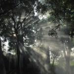 sunlight thru trees