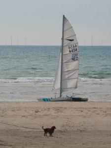 boat navigate beach dog sea sand