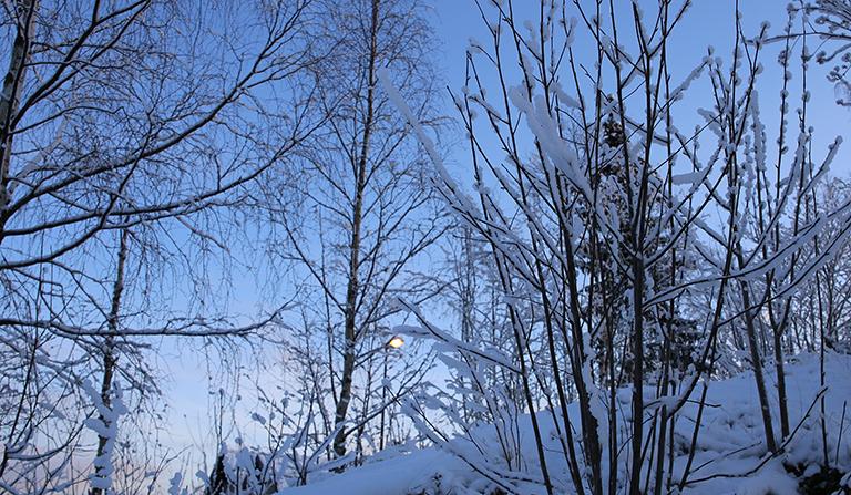 Trær og kratt dekket av snø med sol i bakgrunnen.
