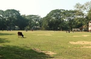 Kalsindur Spielfeld mit Kuh und Sandlöchern