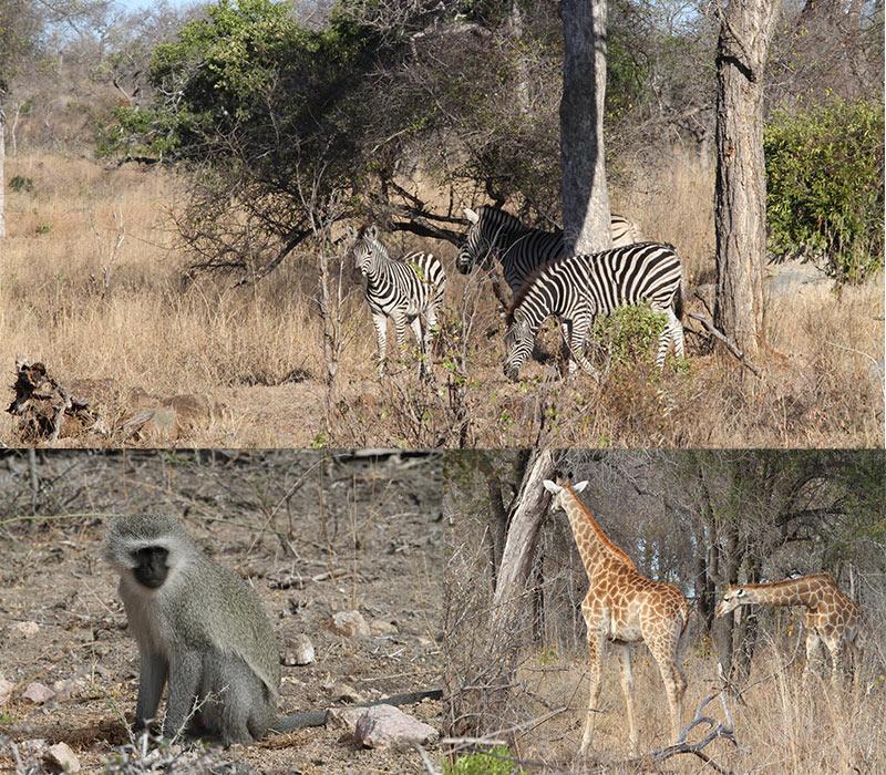 Kruger rondje Phabeni Gate