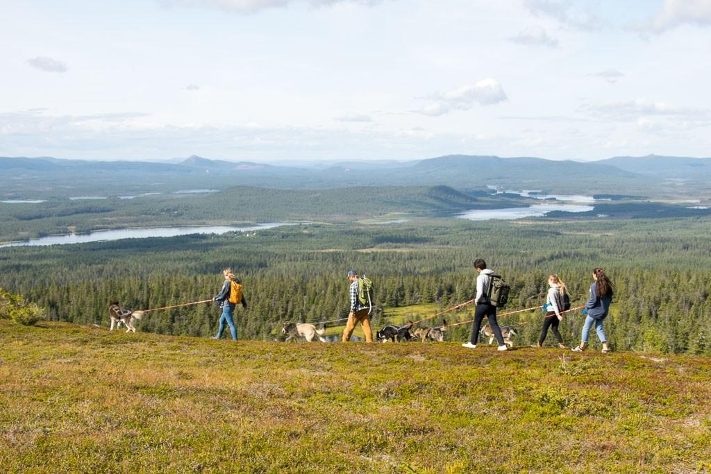 Rondreis Zweden wandelen met husky's