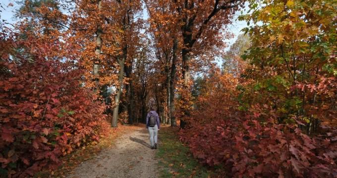 Trage Tocht Arnhem noord - herfst