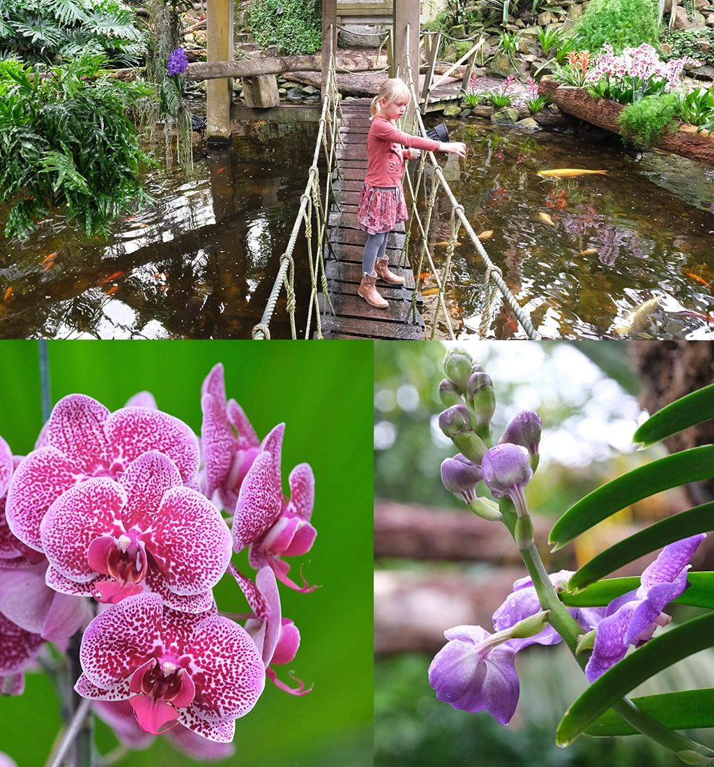 junglepaadjes en Orchideeën