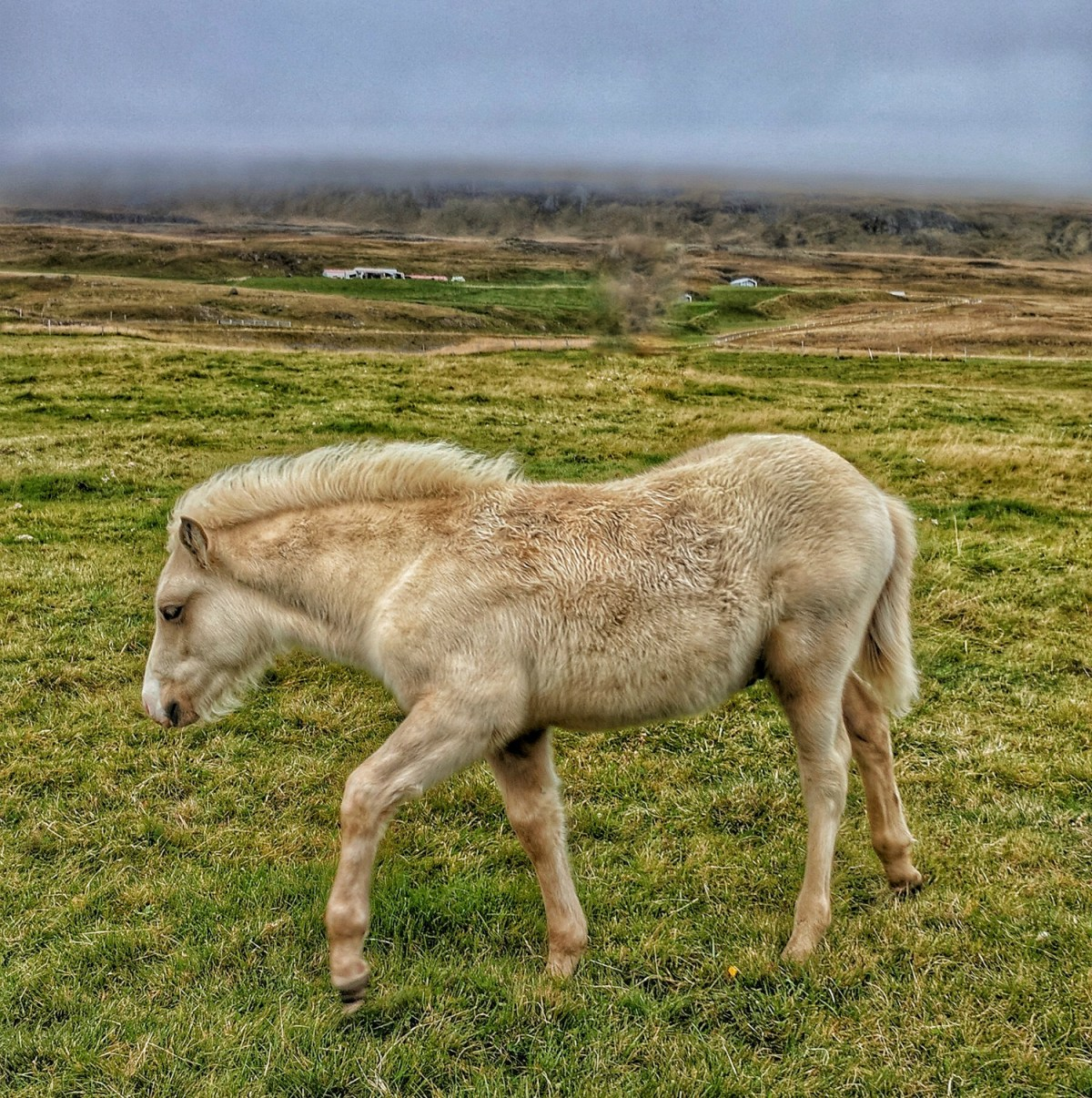 10 top reasons to visit Iceland. As cute as they could be, Icelandic horses will steal your heart.