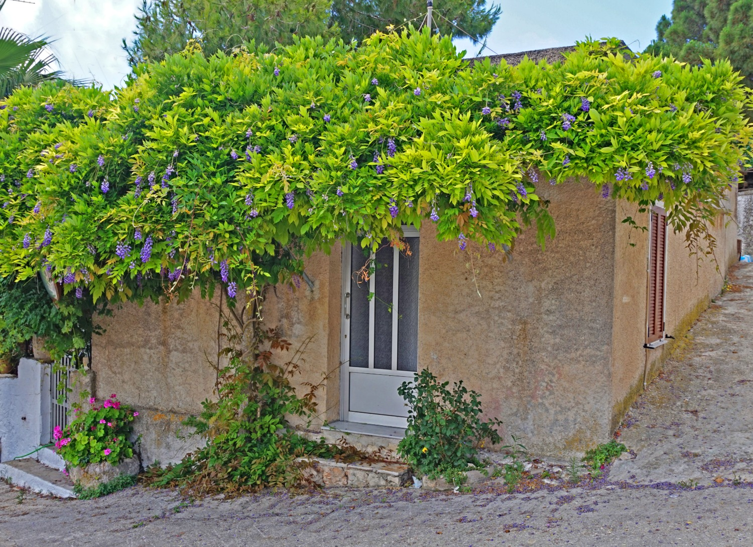 Zakynthos Greece - how to visit. House with greenery on the roof.