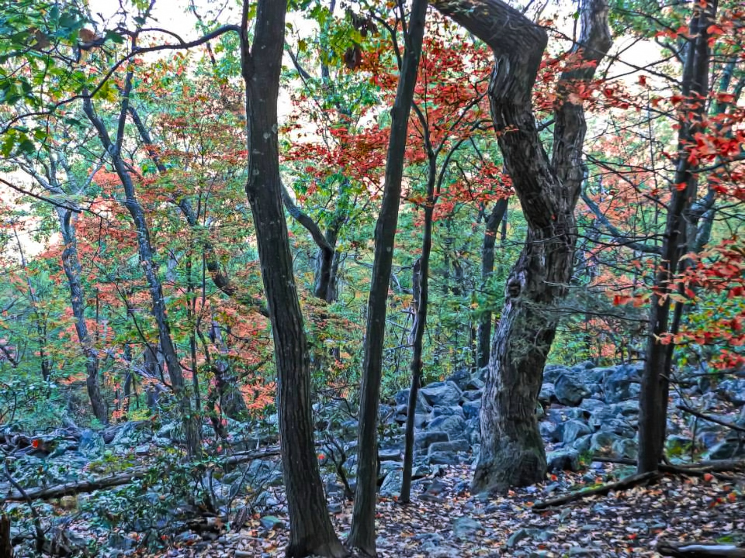 Colorful forest at Delaware Water Gap Recreation Area.