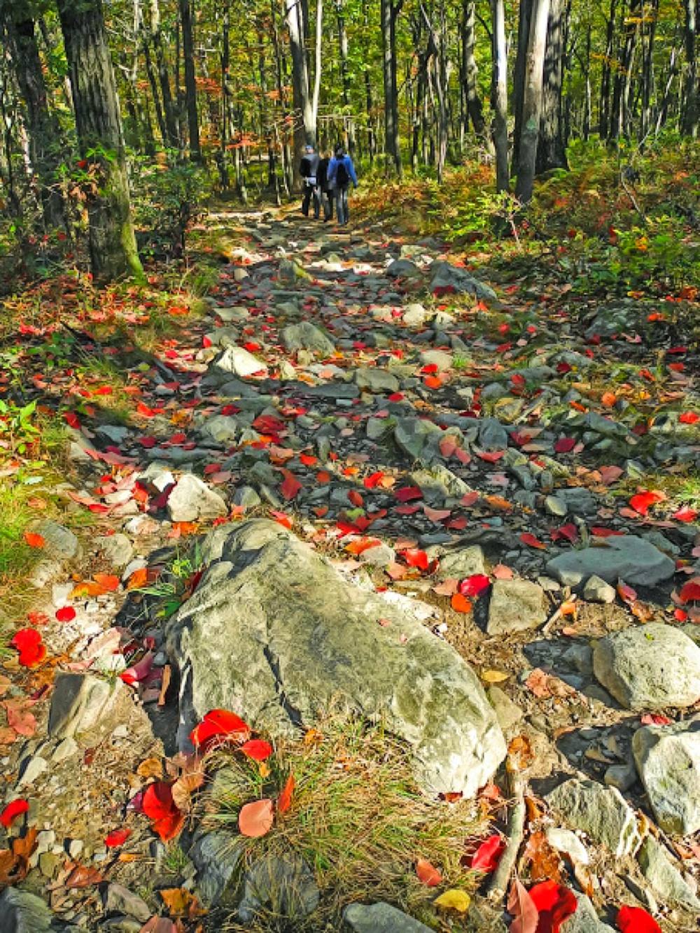 Mount Tammany - blue dot hiking trail with red leaves.