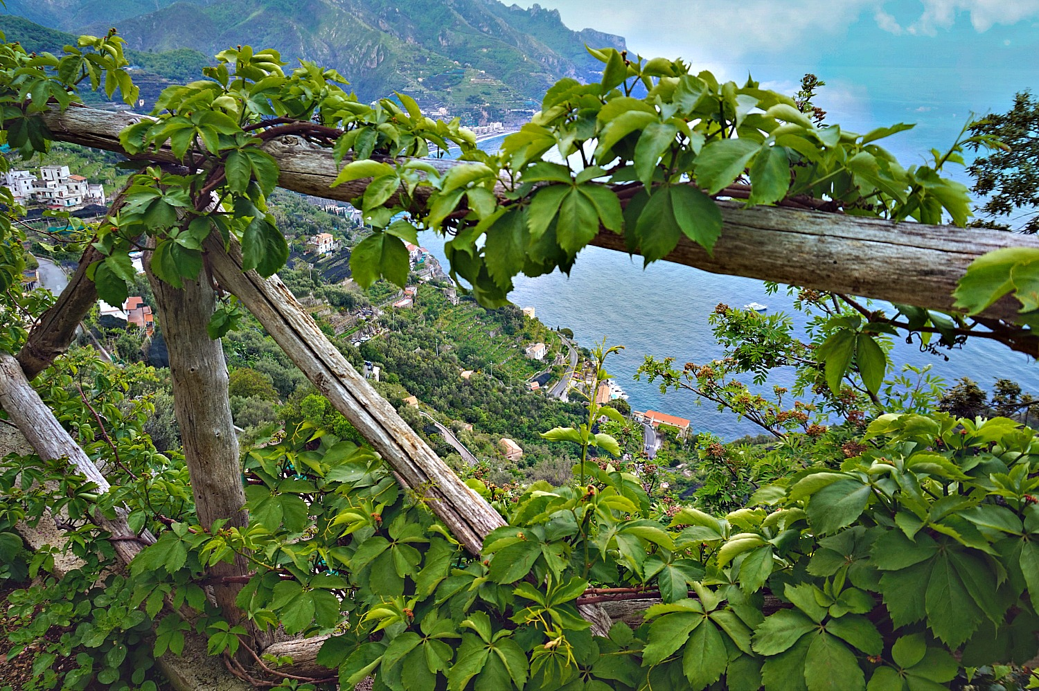 Peeking through a natural fence in Ravello Italy.