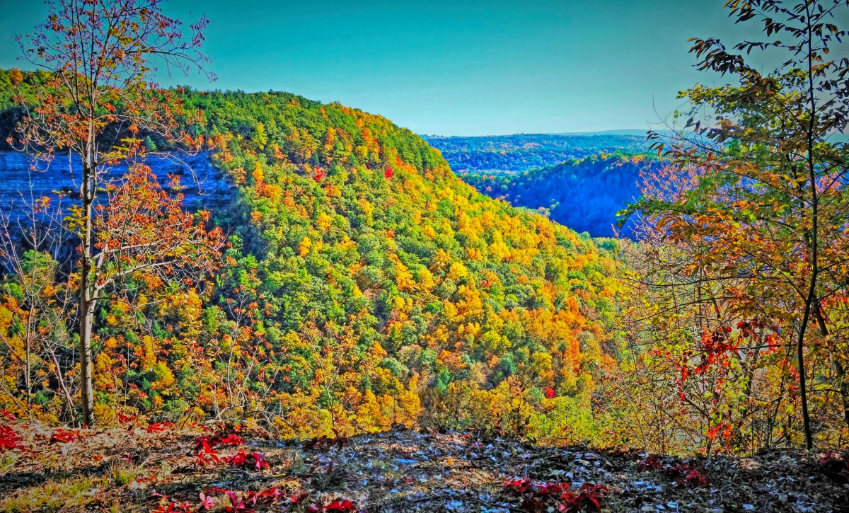 Letchworths is the best state park in New York to see the folliage.