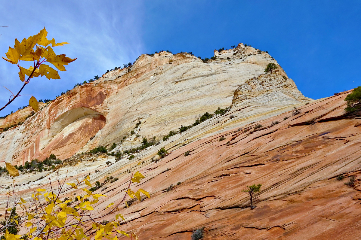 Zion National Park - things to do. Yellow leaves against reddish rocks.