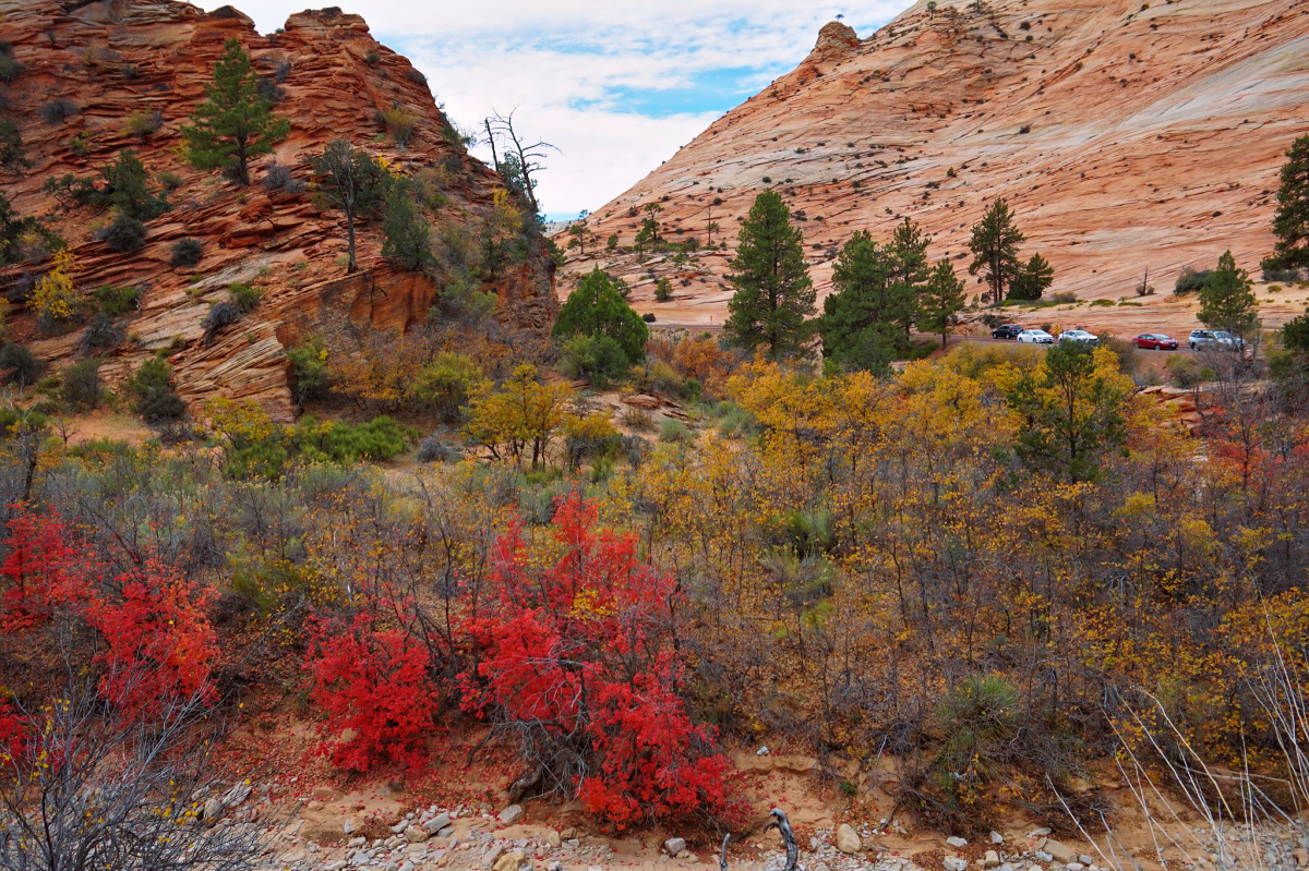 Zion National Park. Red bushes along the road.
