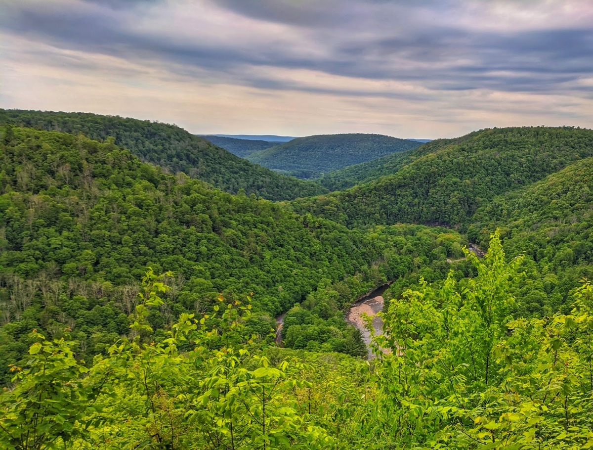 Worlds End State Park, Amazing Loyalsock Canyon Vista bursts with green during spring months.
