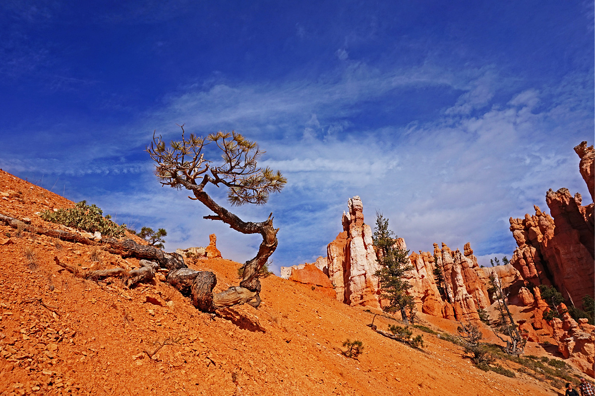 Hoodoos and the trees at Bryce Canyon.