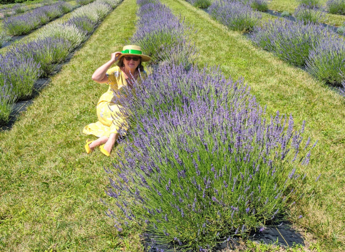 Hope Hill Lavender Farm brings back old fashion relaxation.