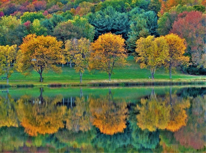 Yellow trees reflecting in a lake at Lackawanna State Park.