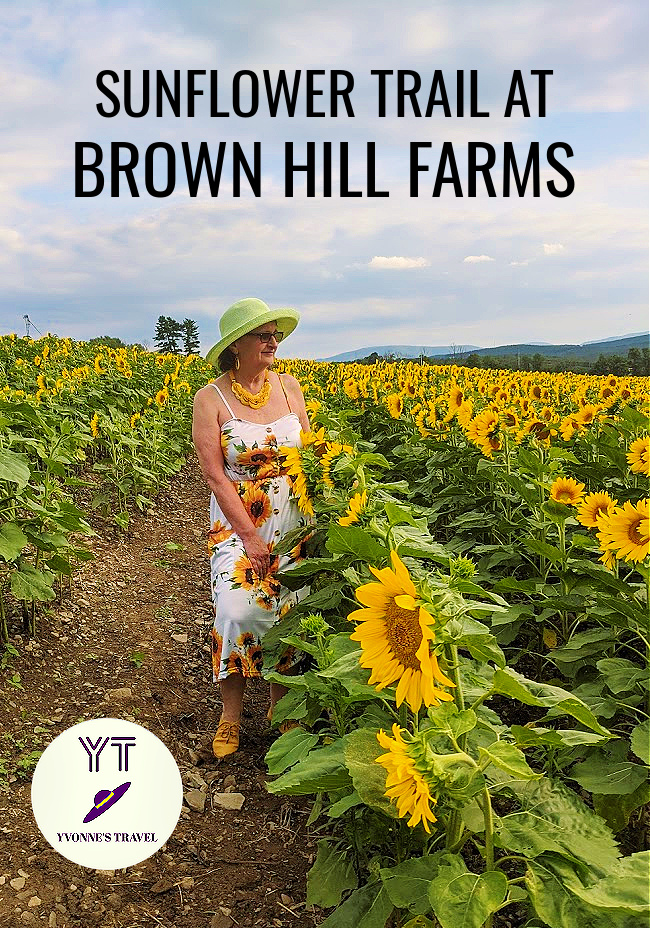 Nothing says summer like the beauty of wide-open sunflower fields of sunflowers. Visit Brown Hill Farms, PA for the flowers and the views.