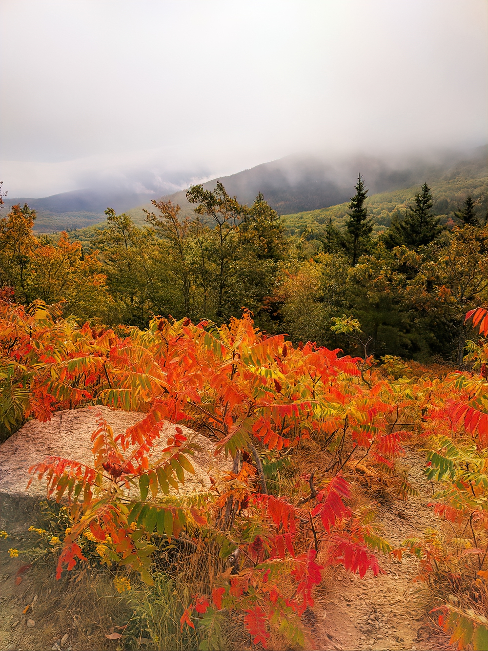 Fall foliage. Foggy morning in Acadia National Park.