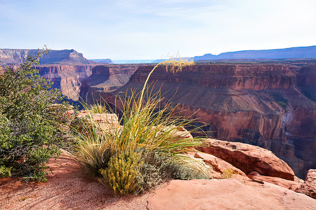 Grand Canyon, Arizona - a view with the bush.