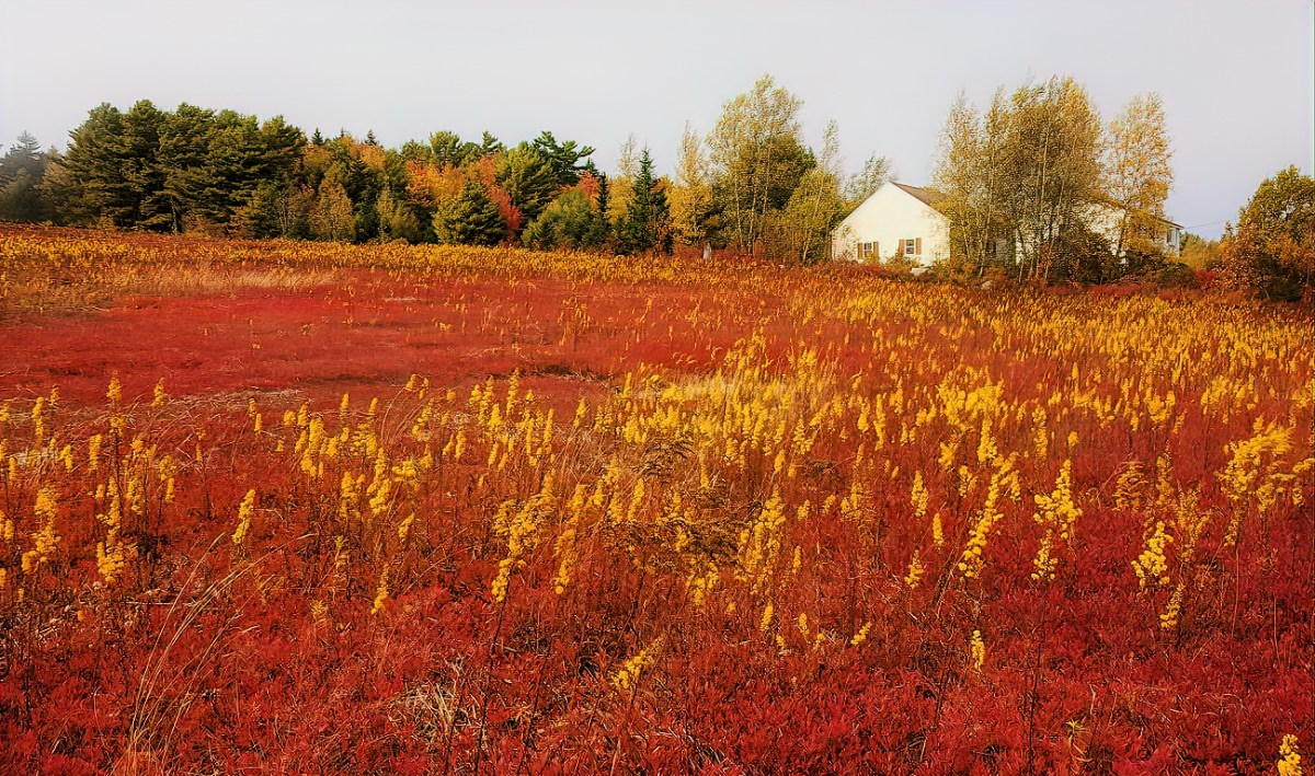 Even the country around Acadia bursts in color starting with the early fall.