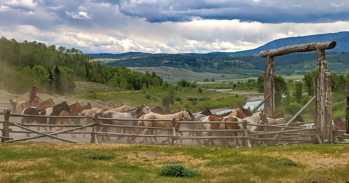 Horses in Bighorn Mountains near Sheridan, Wyoming