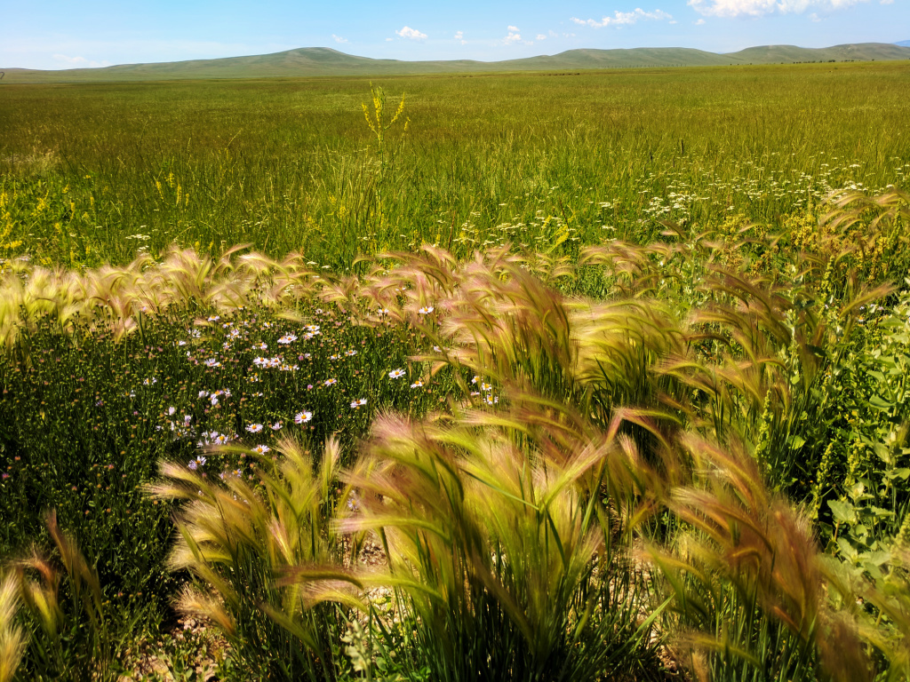 A road to Sheridan, Wyoming - grass meadow.